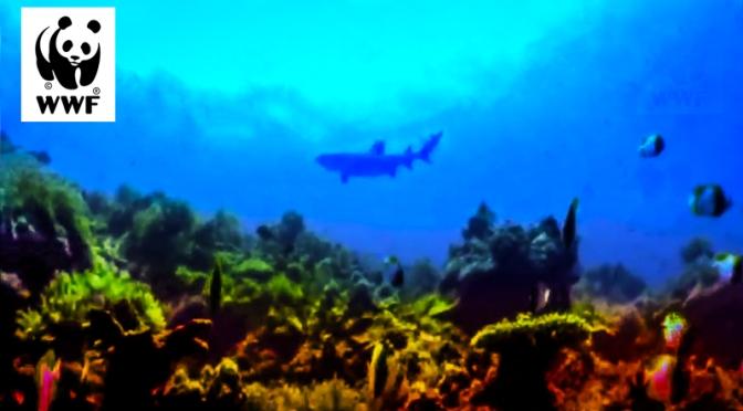 WWF Diver Elmer Fuentes